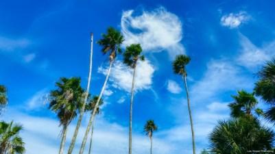 One sad palm tree