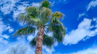 my-palm-tree