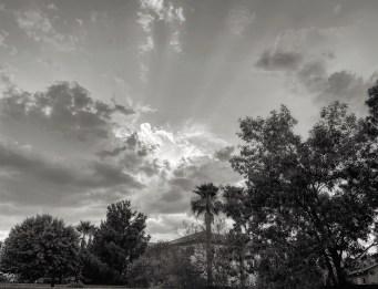 grayscale-backyard