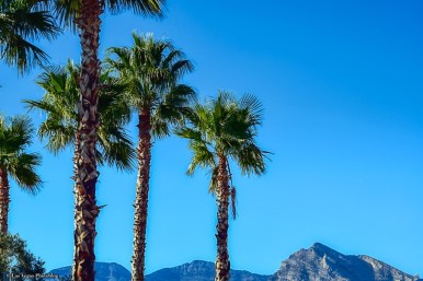 mountains-and-palms