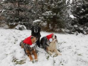 Hunde des Monats Januar: Collies