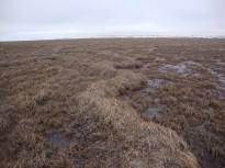 Ridges on the tundra caused by freezing
