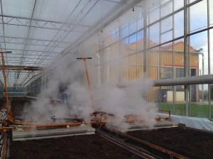 désinfection à la vapeur planche salicorne