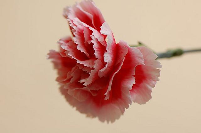 fot. Zixii /flickr