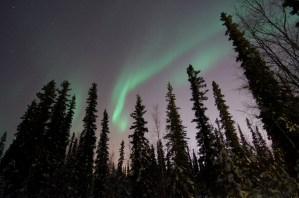 Aurora borealis over trees in Fairbanks, Alaska