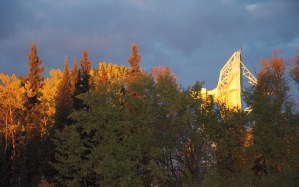 sunlight hits the top of the trees and new satellite dish
