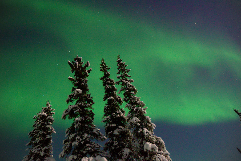 Northern Lights over a boreal forest in Fairbanks, Alaska