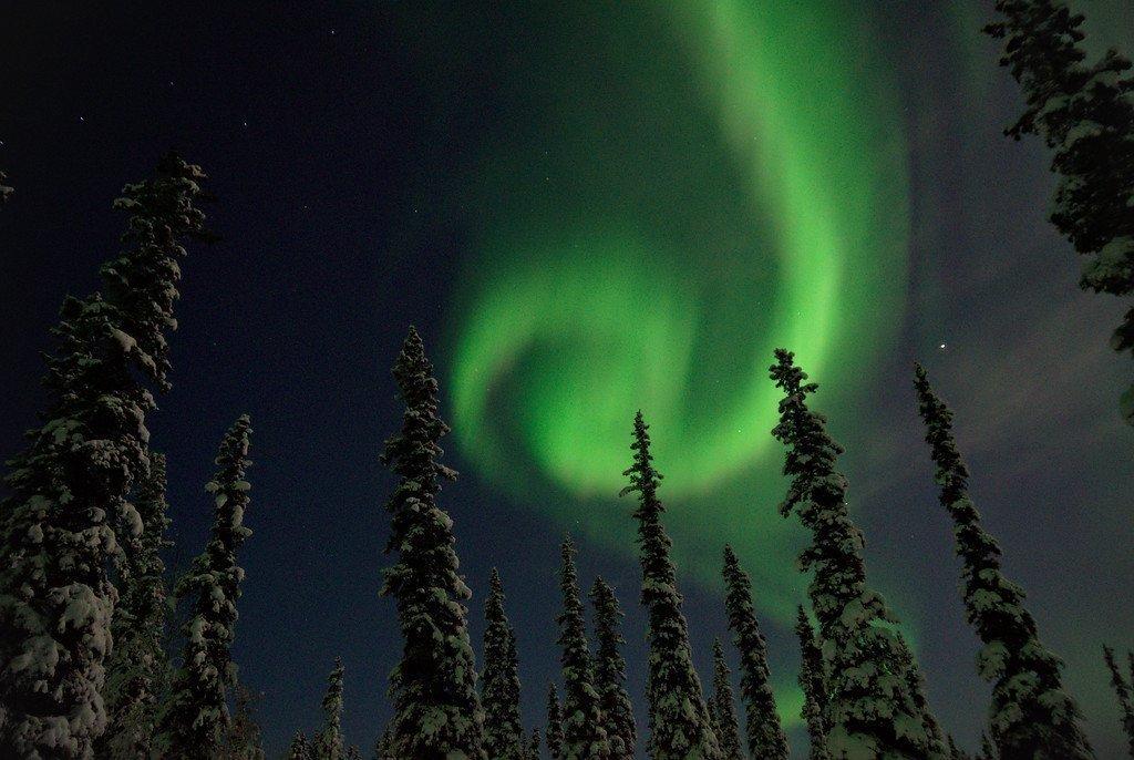 Aurora Borealis spiral over a boreal forest