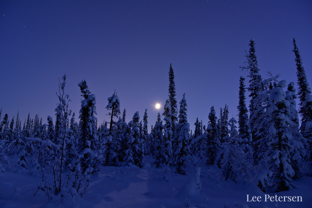 Boreal forest in twilight at 5:30 pm in Fairbanks, Alaska.