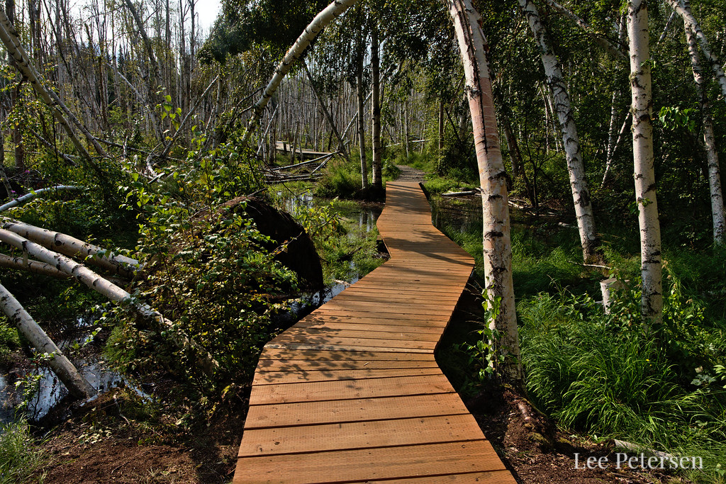 Boardwalk at Creamer's Field in Fairbanks, Alaska