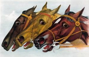horse-316959_1280