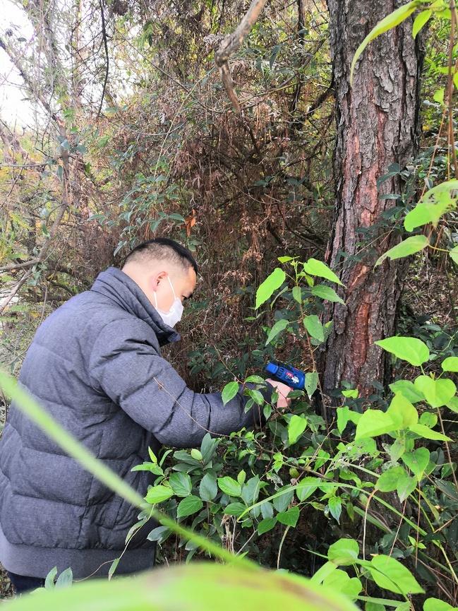 林學院松材線蟲病防控技術研發團隊助力基層生產復工科學防控松材線蟲病