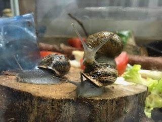 Ponte d'escargot