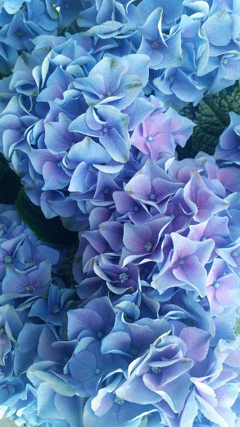 London Sky Garden Flowers
