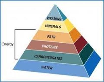 6 Key Nutrients  Final FACS project