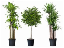 modern-plants