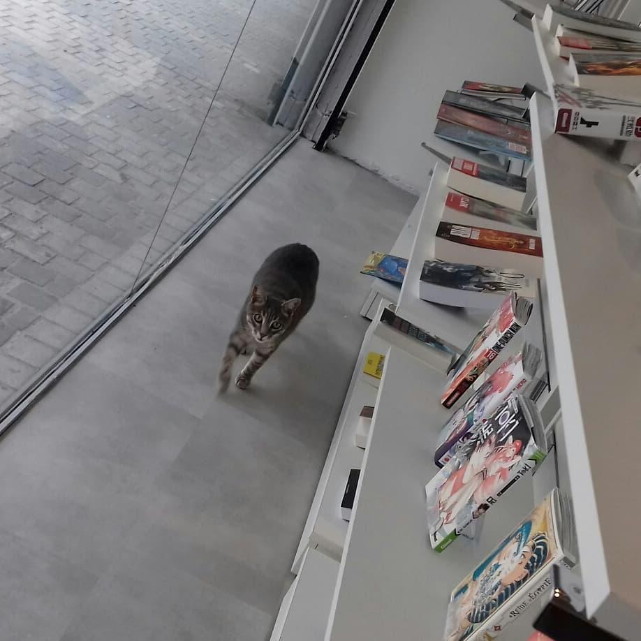 chat dans librairie