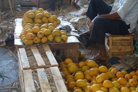 Ripe beautiful mangoes displayed. Absolutely beautiful