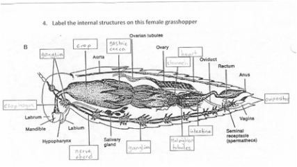 Higher Invertebrates
