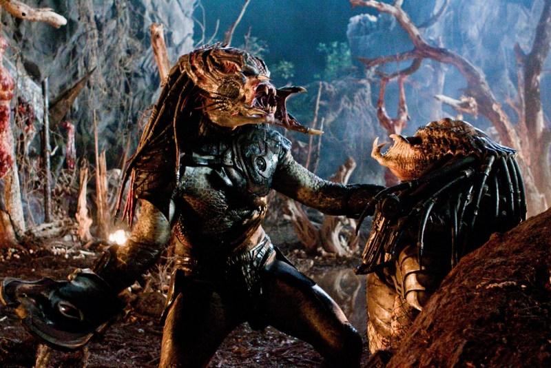 Predators fighting each other