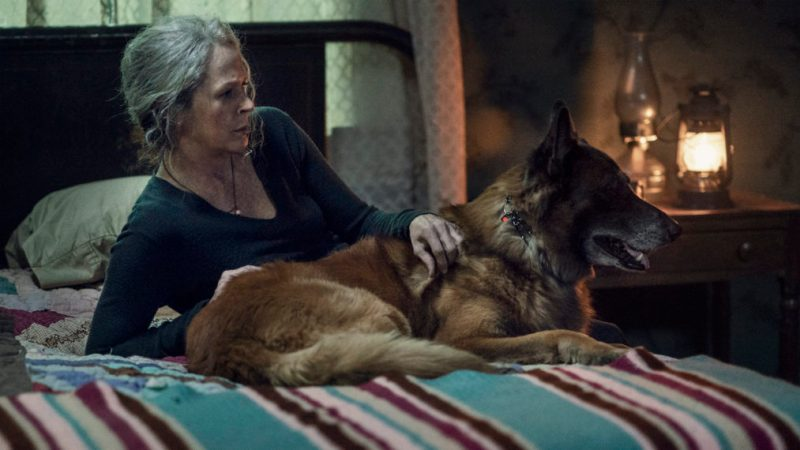 the walking dead diverged review -carol and dog