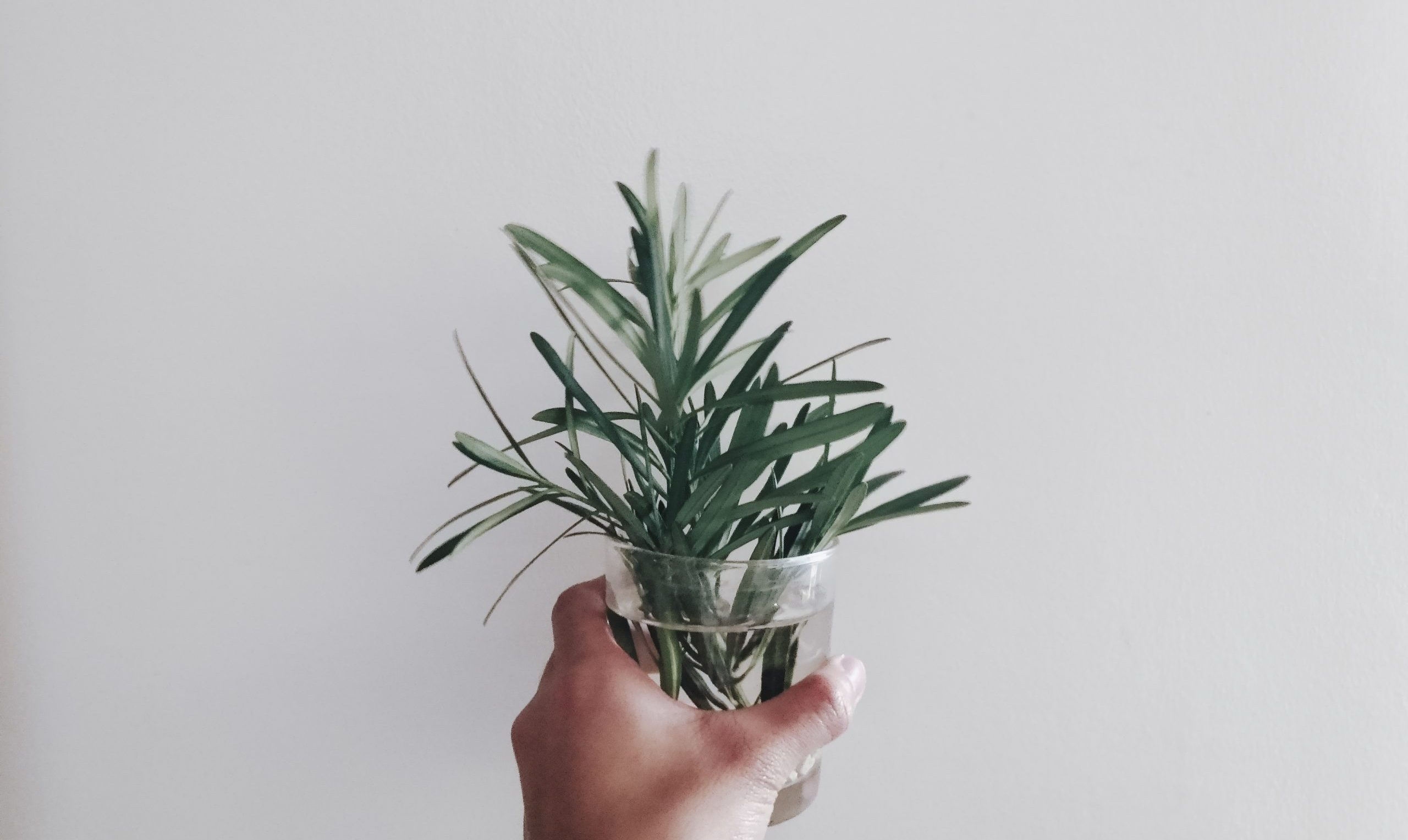 Canva - Person Holding Green Leaf Plant