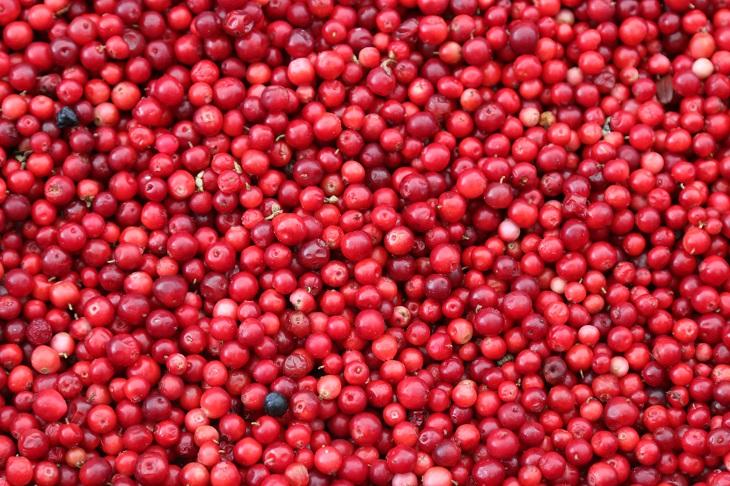Infectolab - cherries