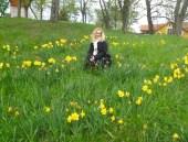 Caroline daffodils dream