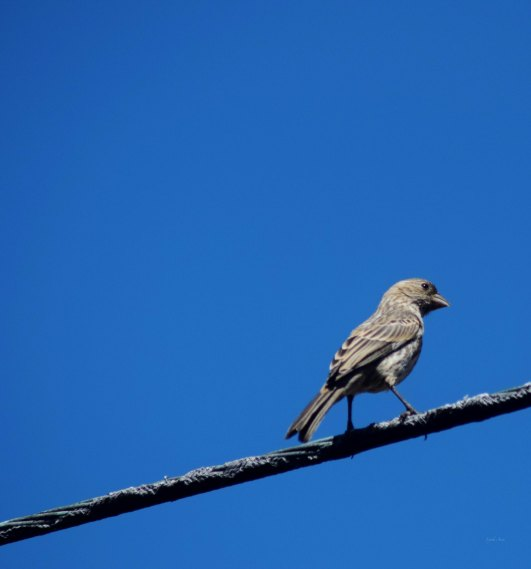 A Bird On A Wire