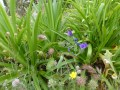 Wild flowers May 13 (1) - Copy