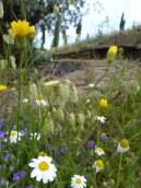 Wild flowers May 13 (2) - Copy