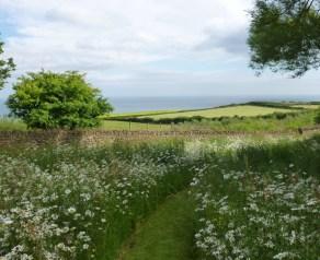 Mown path through Meadow - Dan Pearson