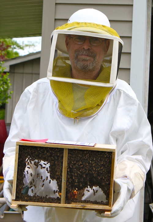 Dave and our bees