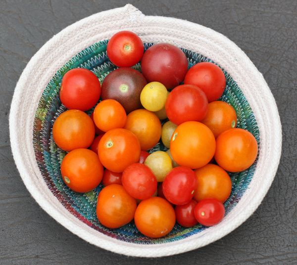 firsttomatoes16