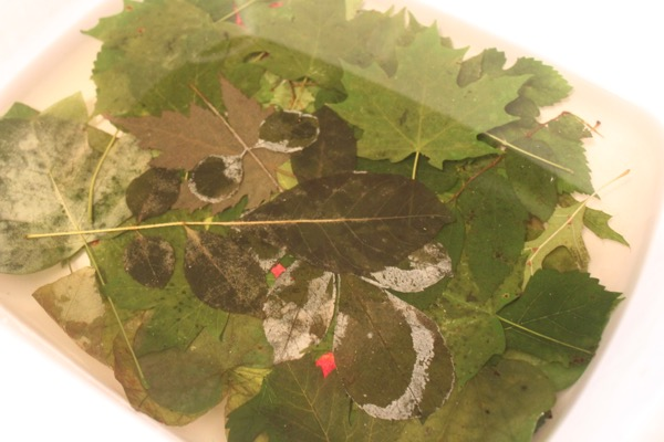 How To: Printing With Leaves - Lynda Heines Fabric Design