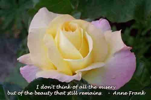 Quote from Anne Frank about the beauty that remains over a photo of a peace rose