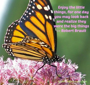 Enjoy the little things, for one day you may look back and realize they were the big things, Robert Brault, Public Domain Image via http://www.publicdomainpictures.net/view-image.php?image=14332&picture=monarch-butterfly