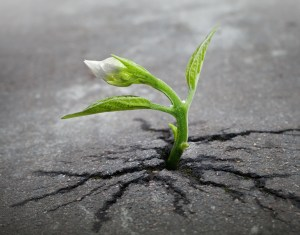 The Story Planted A Seed. A determined idea, like a sprout, will find a way to grow.