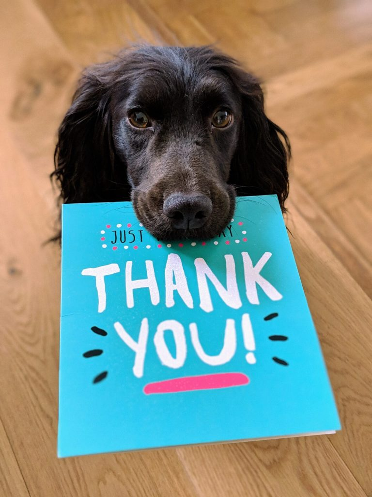 Image of a black long-eared dog hoding a card that reads, Thank You