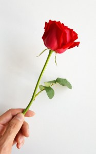 a rose being handed to someone is another random act of love and kindness in this story