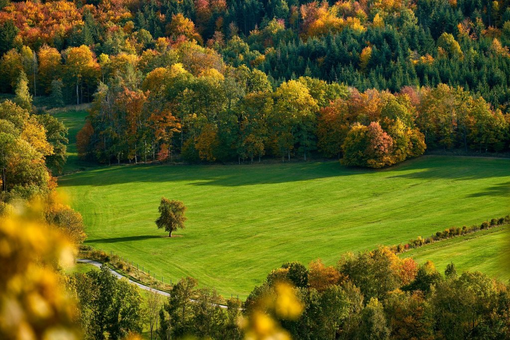 Photograph of a field surrounded by trees turning from green to yellow, gold, and rust colors. It's autumn and time to tend your creativity for the season.