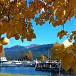 Yellow leaves frame a boat marina at Lake Te Anau.