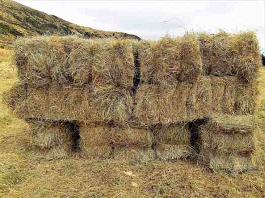 A temporary stack of 13 hay bales in the paddock.
