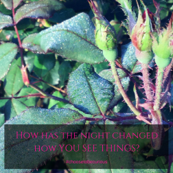 How has the night changedhow YOU SEE THINGS?