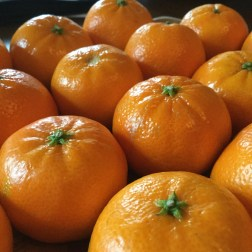 Day 1 of #mycuriouseyes and our theme is #color #colour I can't keep my eyes off these cheerful Clementines. They look to me like a holiday cross-over, something between tiny pumpkins and the tangerines we stick in the toes of our Christmas stockings...