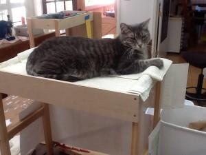 cat storage devices in Lynn Bridge's mosaic studio, Glencliff Art Studio, in Austin, TExas