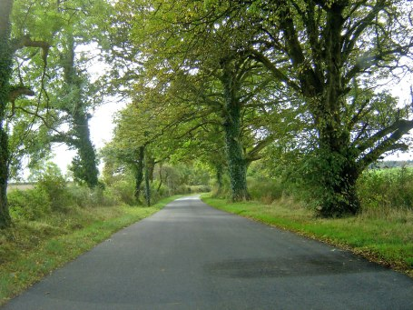 driving Welsh country roads and hedgerows