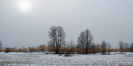 hedgerow and lightly snow covered field
