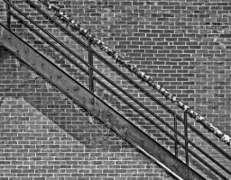 stairs and brick wall black and white