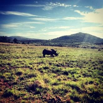 On Safari in Pilanesburg, South Africa